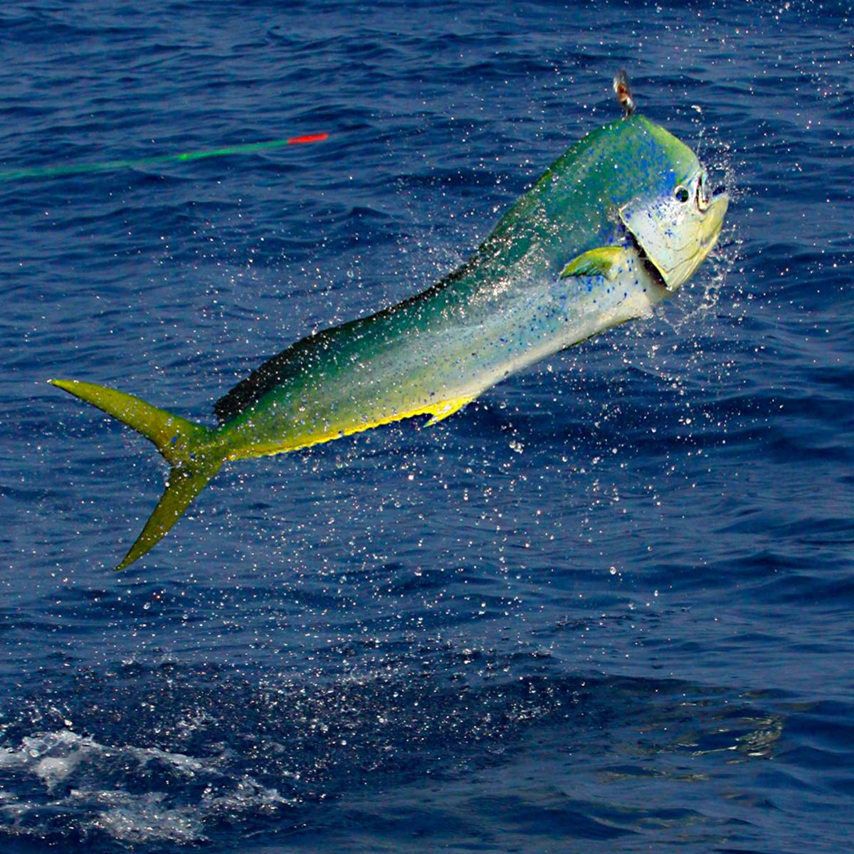 Cabo Sport Fishing: Beginner To Expert Anglers