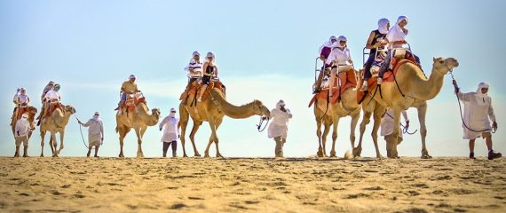 Outback Camel Safari Tours